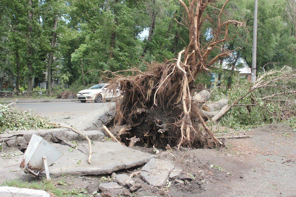 Деревья вырваны с корнями