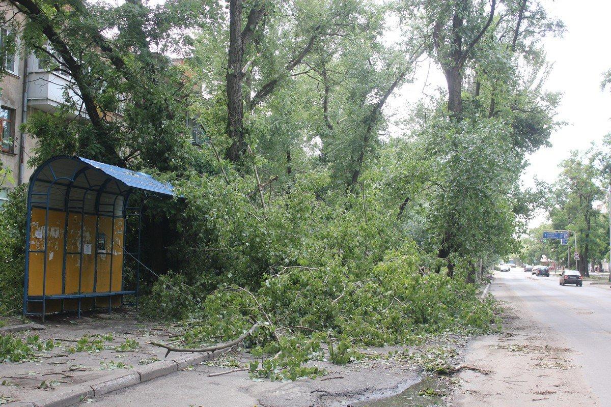 На остановке поваленные деревья зацепили линии электропередач