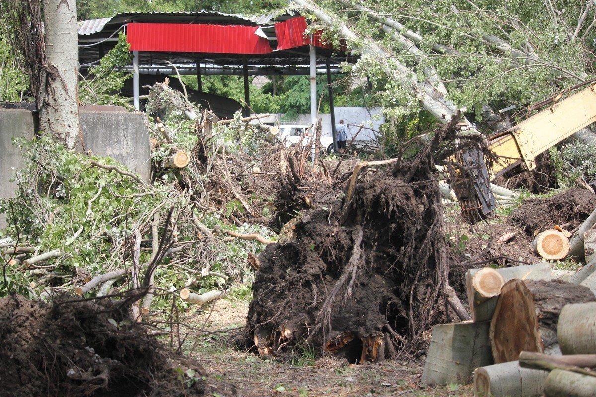 В Никополе на заправочную станцию упали деревья