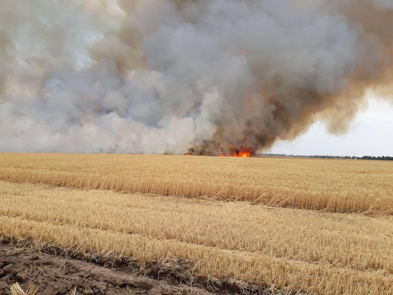 Под Никополем тушили поле с пшеницей