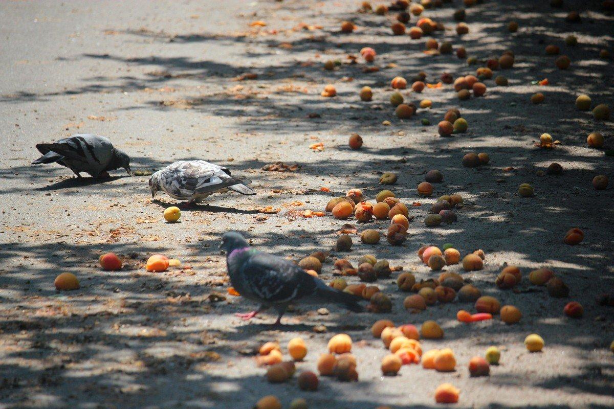Изобилием наслаждаются даже птицы