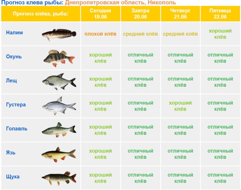 Прогноз клёва рыбы в Перми, Пермский край на неделю, рыболовный календарь