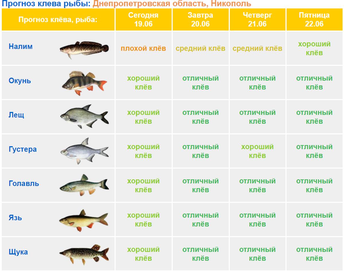Клев рыбы в нефтеюганском районе