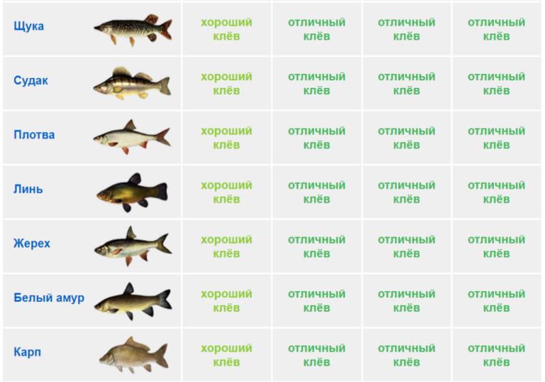 Прогноз клёва рыбы новоуральск