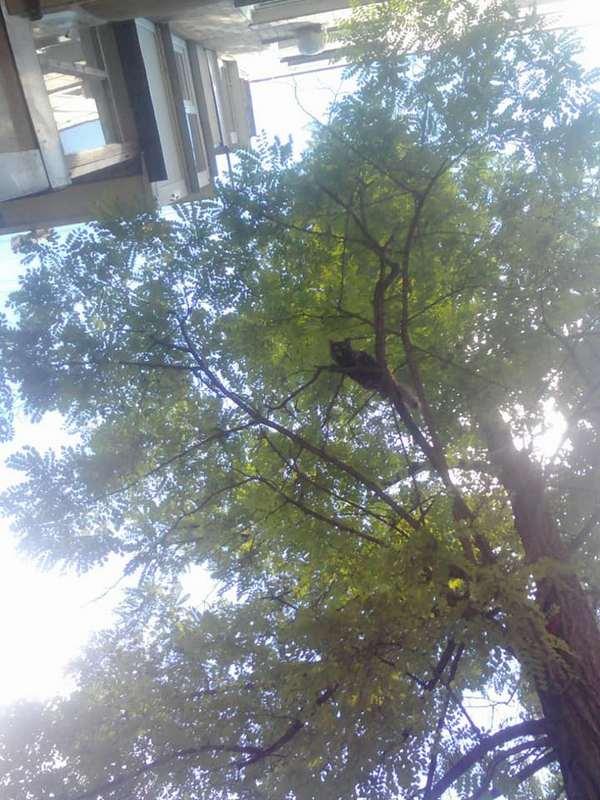 Кот просидел больше суток высоко на дереве