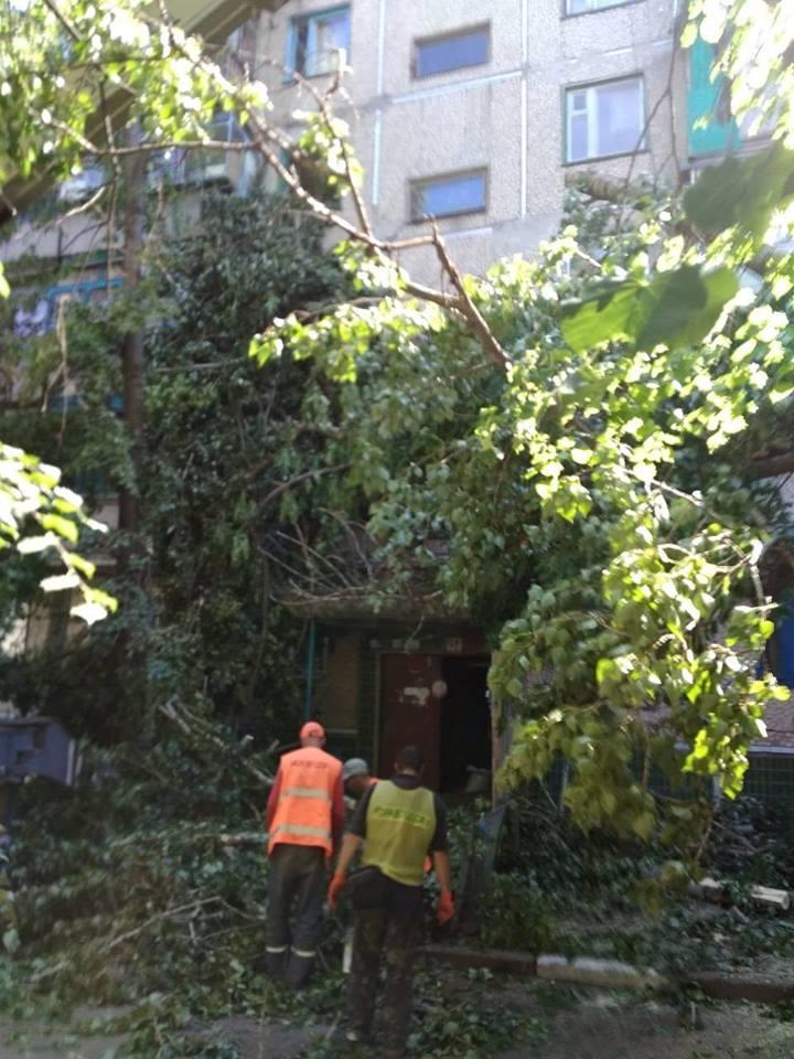 В Никополе тополь упал на жилой дом