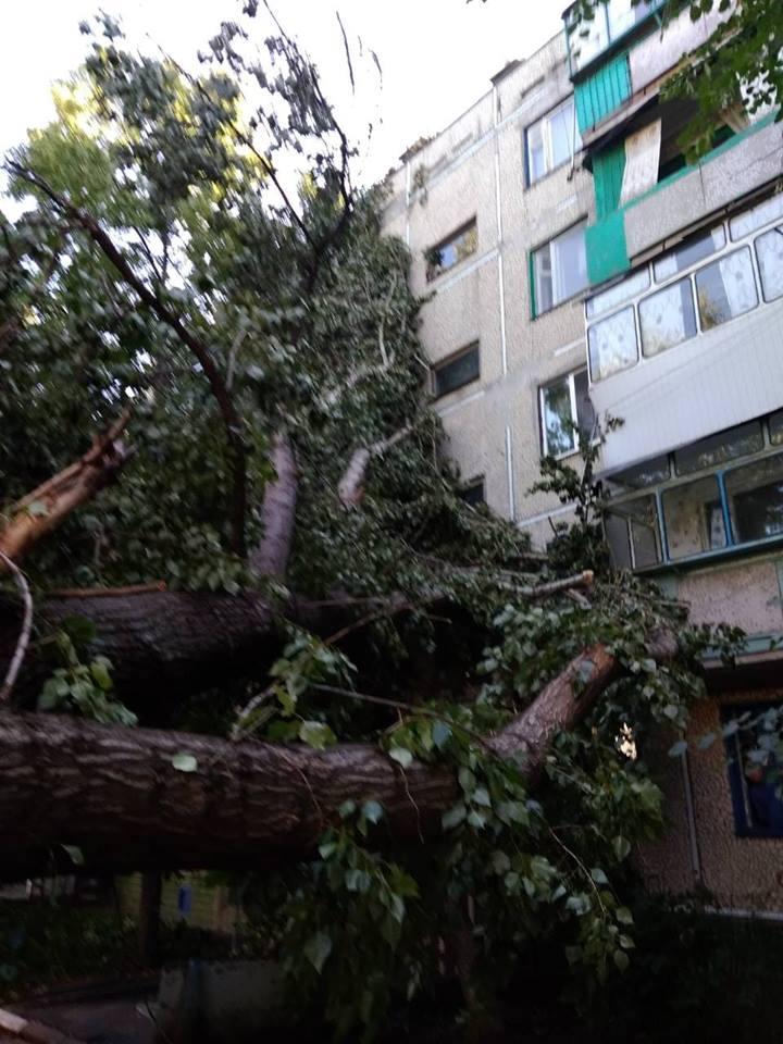 Тополь разбил окна на 4-м этаже