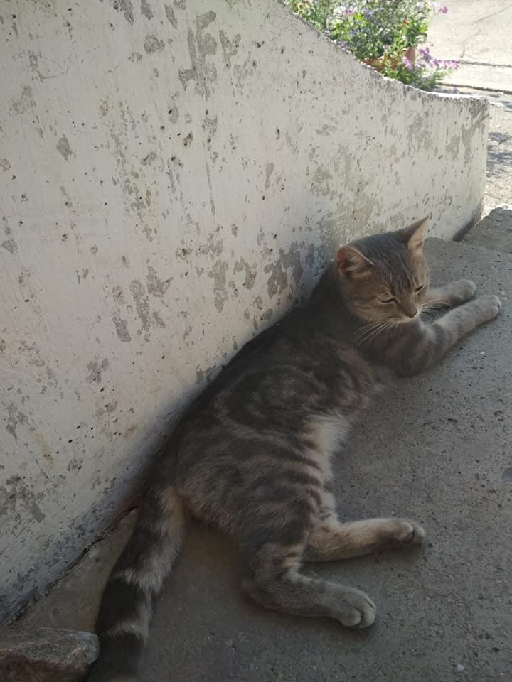 Найден кот на улице Княжеская