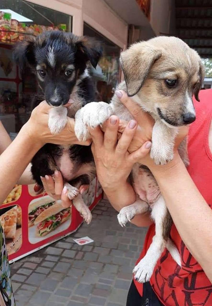 """Забрать собачонок можно завтра на рынке """"Виктория"""""""