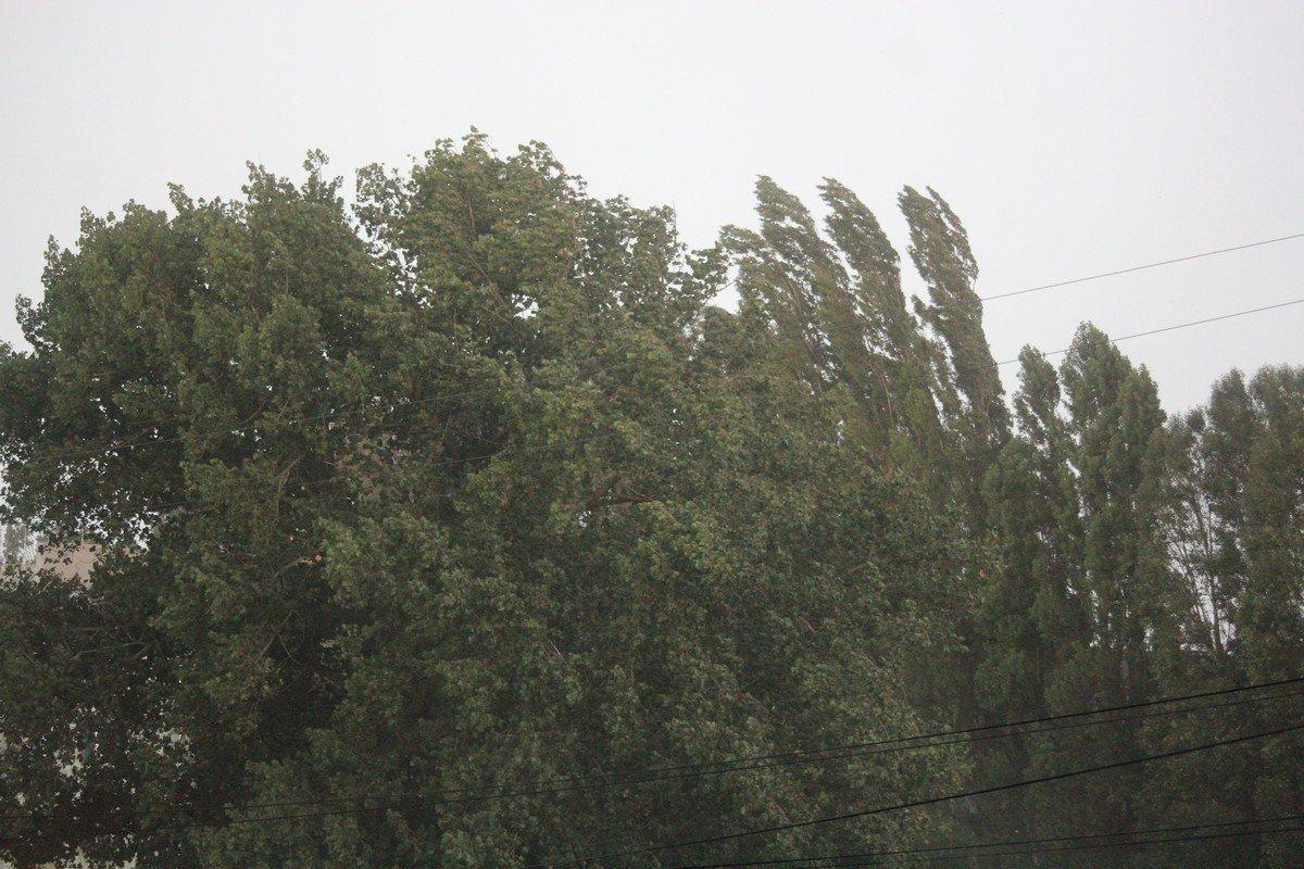 Деревья высокие, прошлую бурю выстояли
