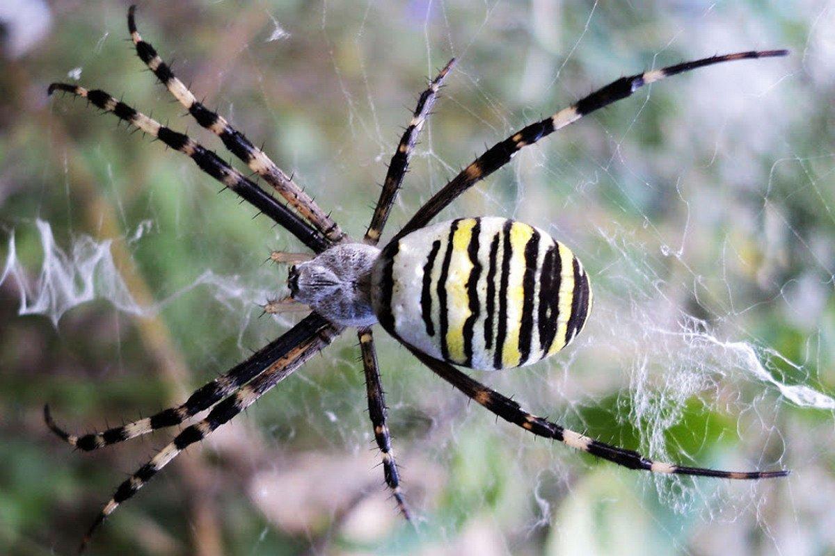 пауки урала в картинках боится