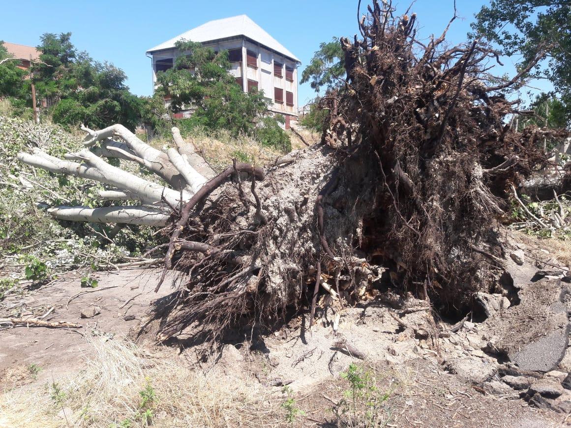 Деревья упали и перегородили проезд