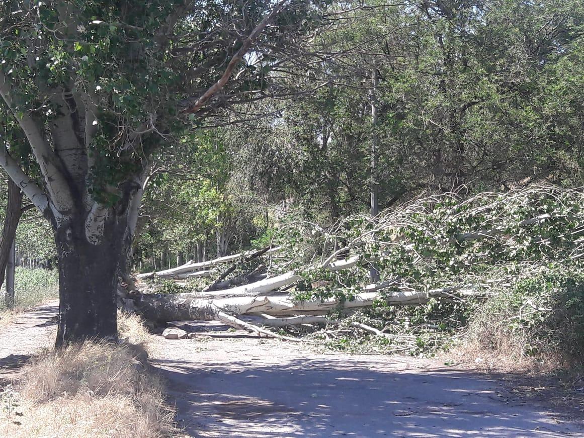 За последние 40 лет в Никополе не было такого ветра
