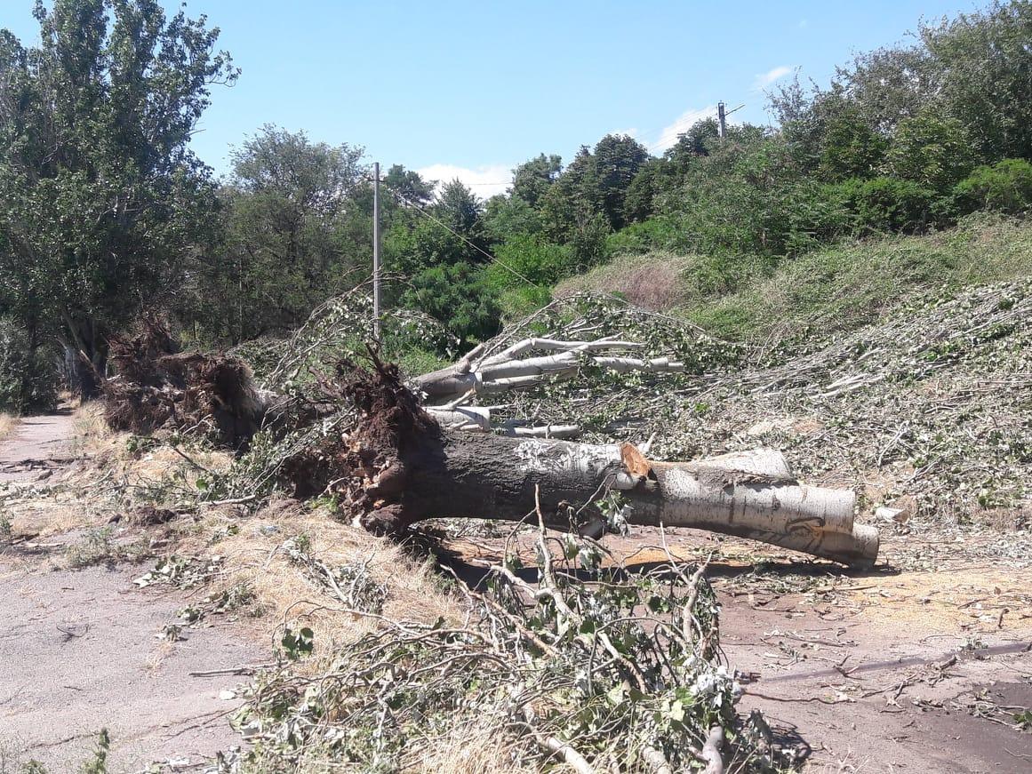 Деревья постепенно распиливают и вывозят