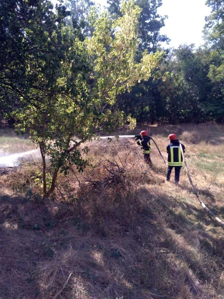 Лес тушили 10 спасателей
