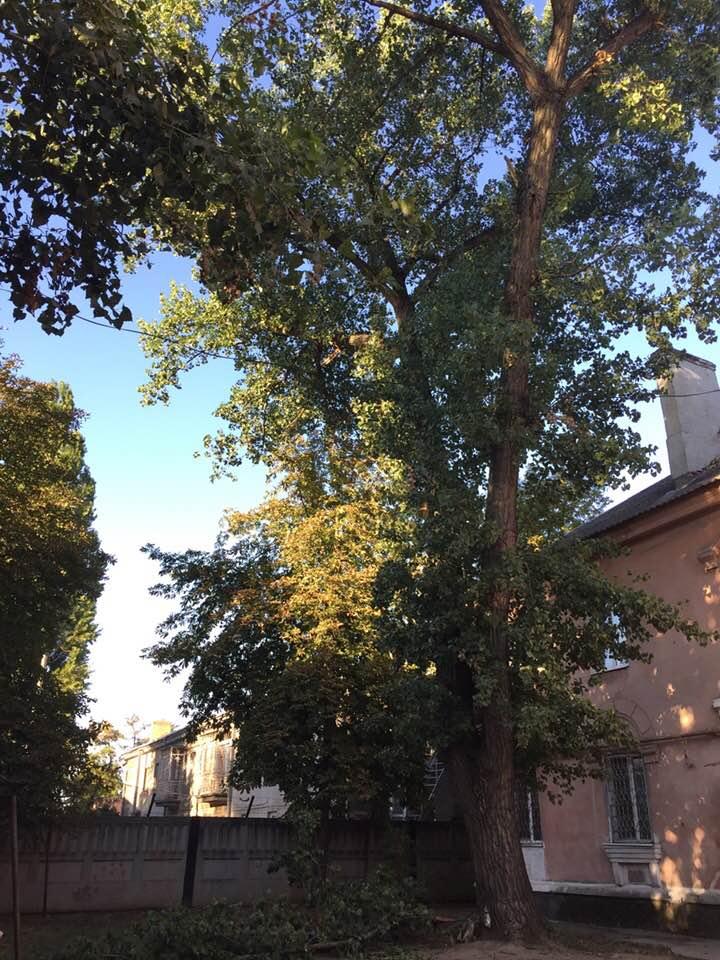 Двор на улице Чубаря опасен для игр, здесь растут аварийные деревья