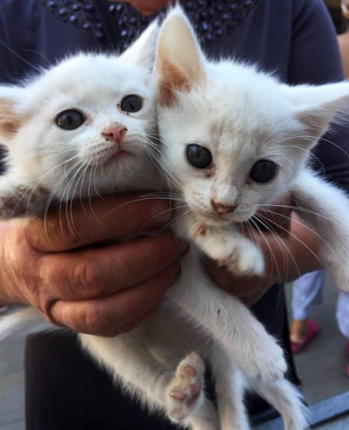 Котят подбросили во двор, теперь им ищут хозяев