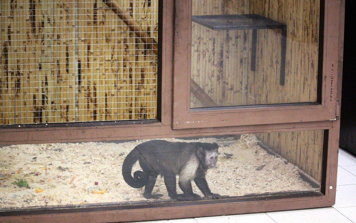 Мини-обезьянкам, которых привезли в Никополь, живется не так уж и плохо