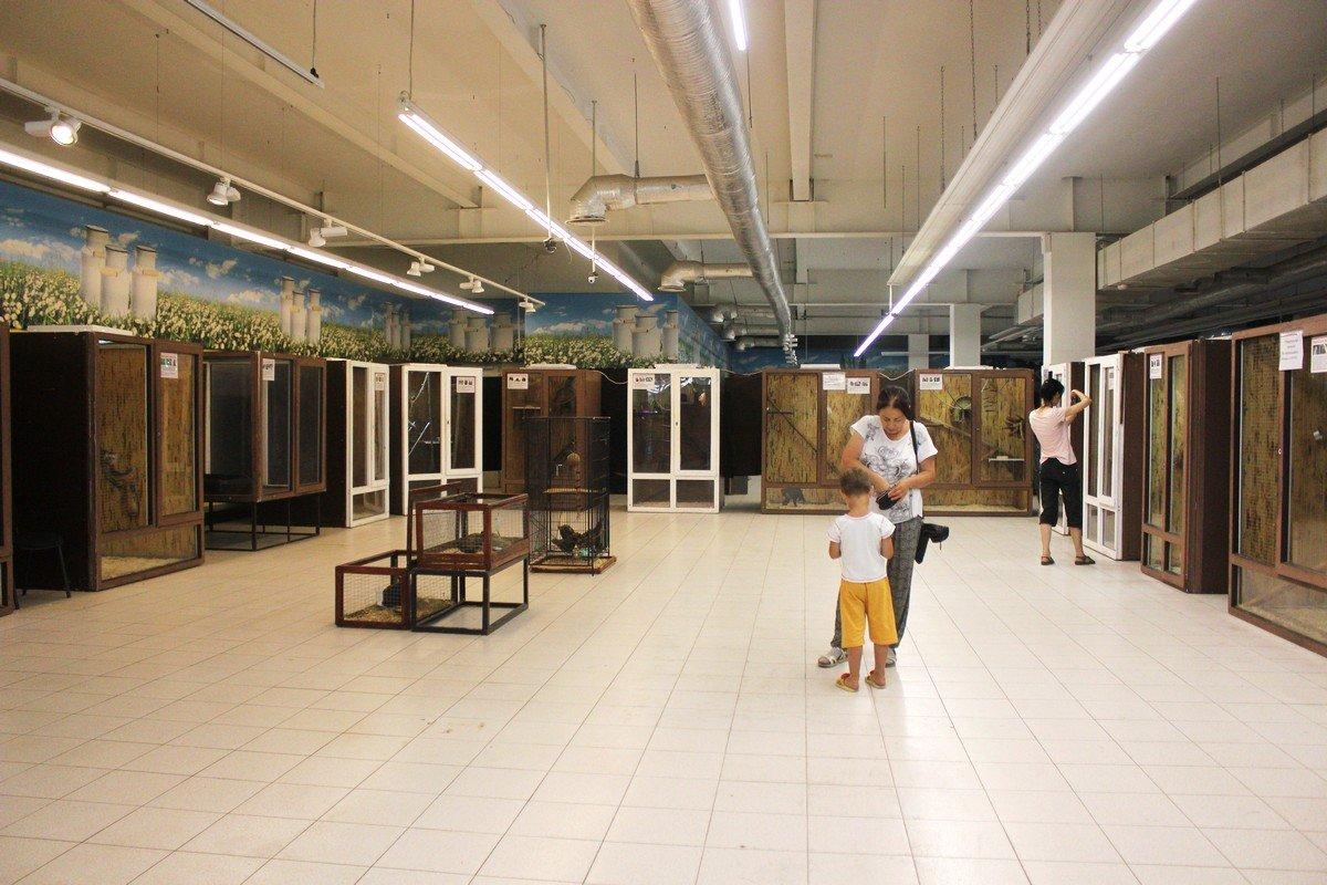 На выставке 12 стеклянных вольеров