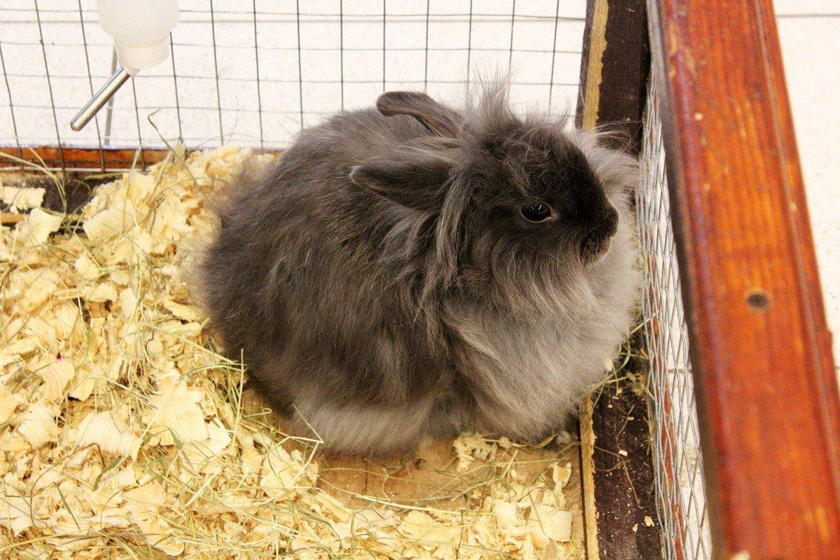 Обаятельные декоративные кролики