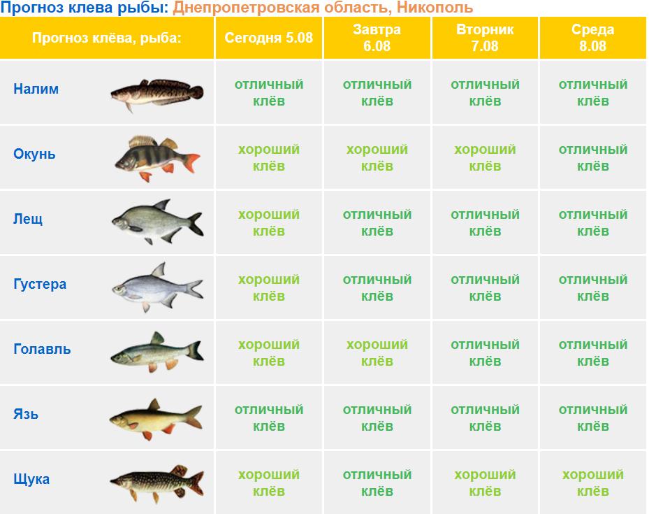 Клев рыбы в ульяновске на завтра
