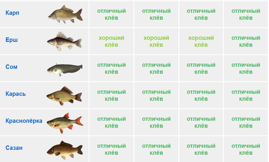 Календарь рыболова на 5 — 8 августа