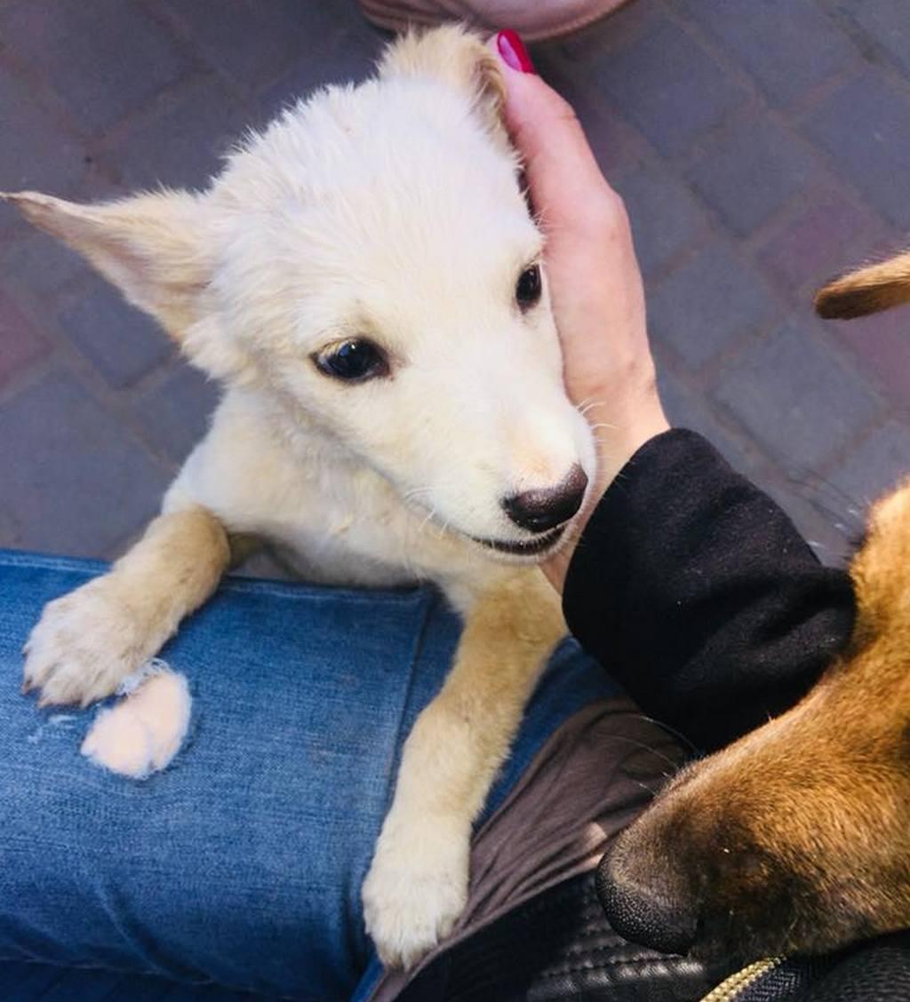 В Никополе прекрасная собачка хочет найти семью