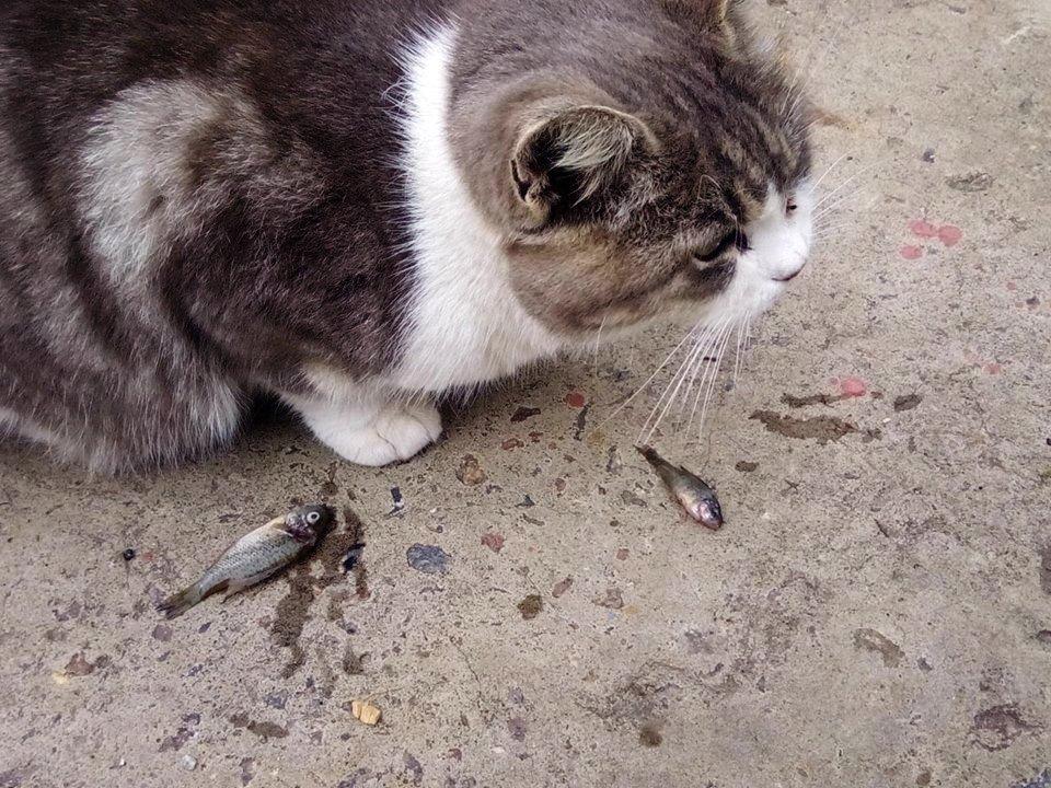Котику тоже досталась рыбка