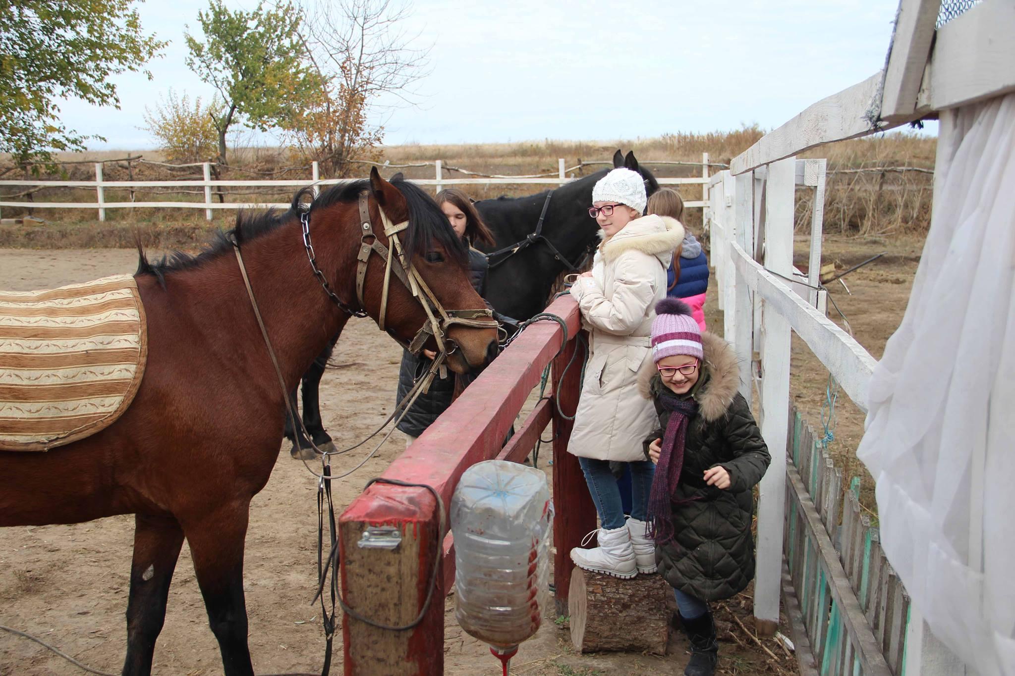Общение с лошадьми улучшает настроение, дарит ощущение радости, снимает стресс и нервное напряжение