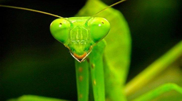В Никополе появились странные насекомые, фото-1