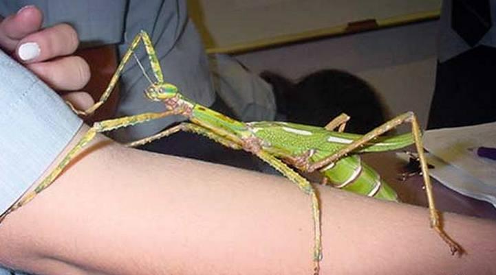 В Никополе появились странные насекомые, фото-2