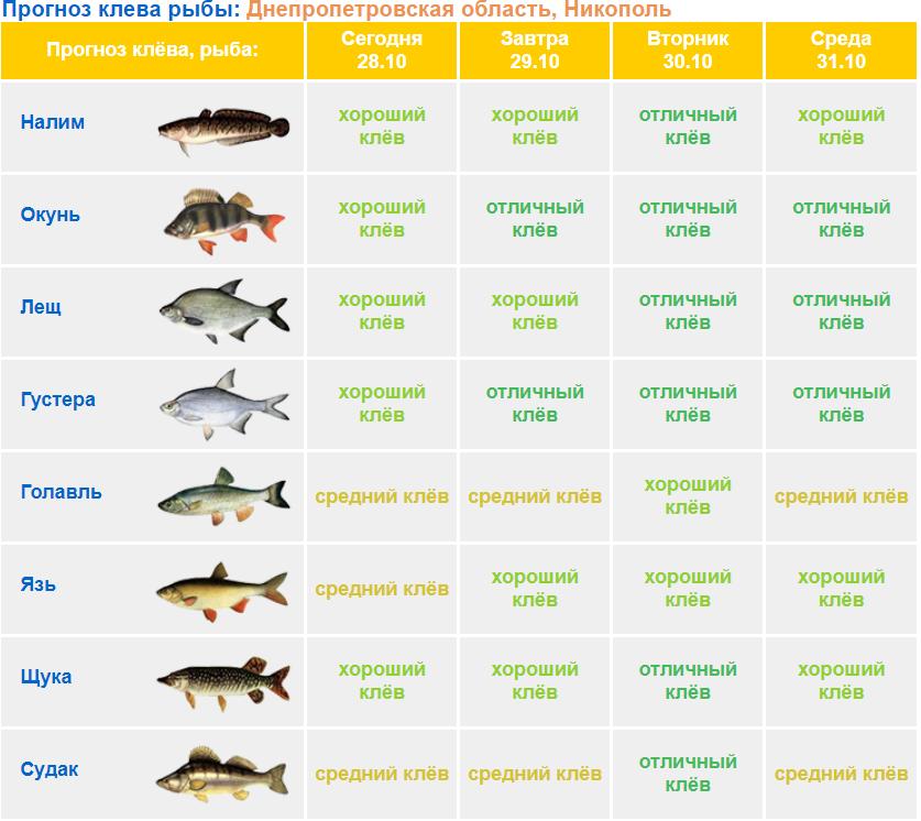 На каждом водоёме настроено разных местечек для комфортной и стопроцентной рыбалки.