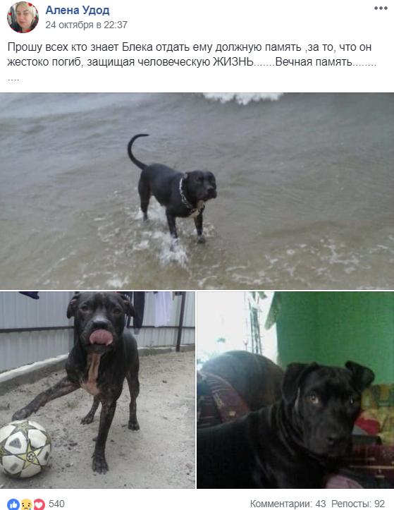 В Никополе пса убили ножом в сердце, фото-1