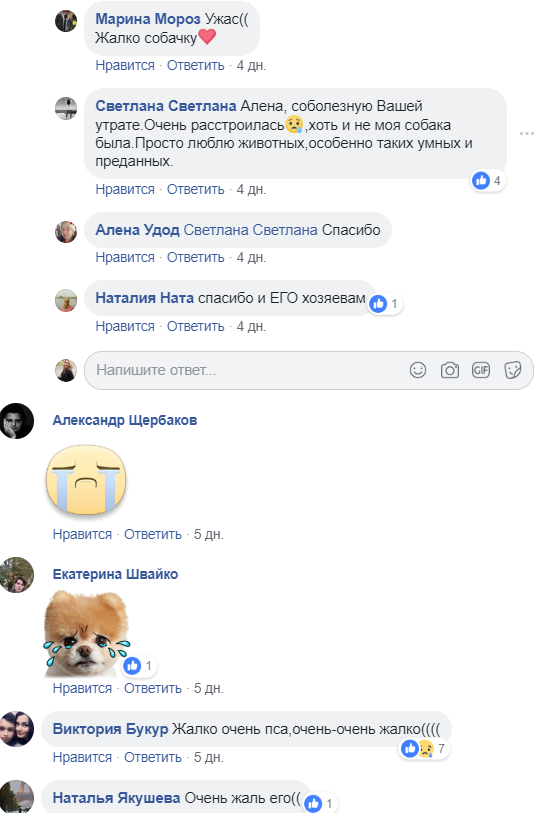 В Никополе пса убили ножом в сердце, фото-2