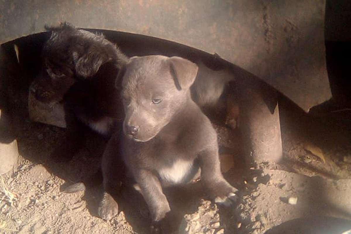 Четыре милых щенка