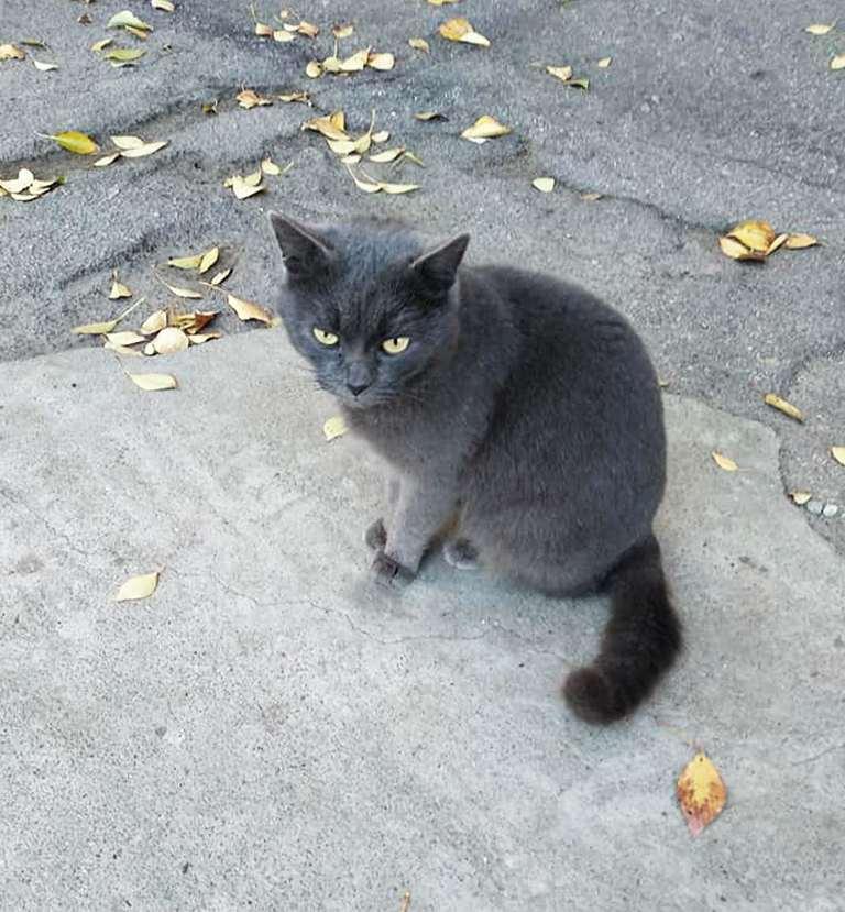 Вот такую прекрасную и ухоженную кошку увидели прохожие в старой части города