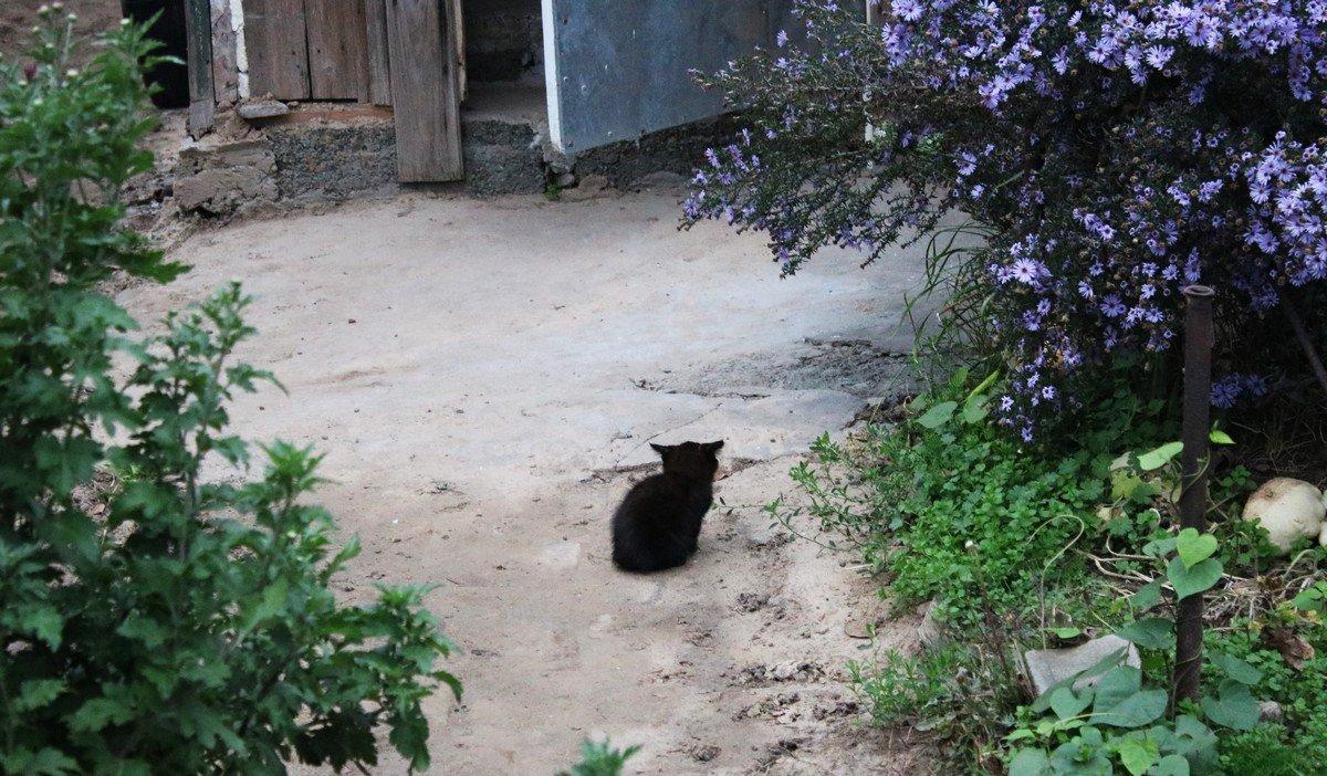 Наталья переживает, что котика могут убить