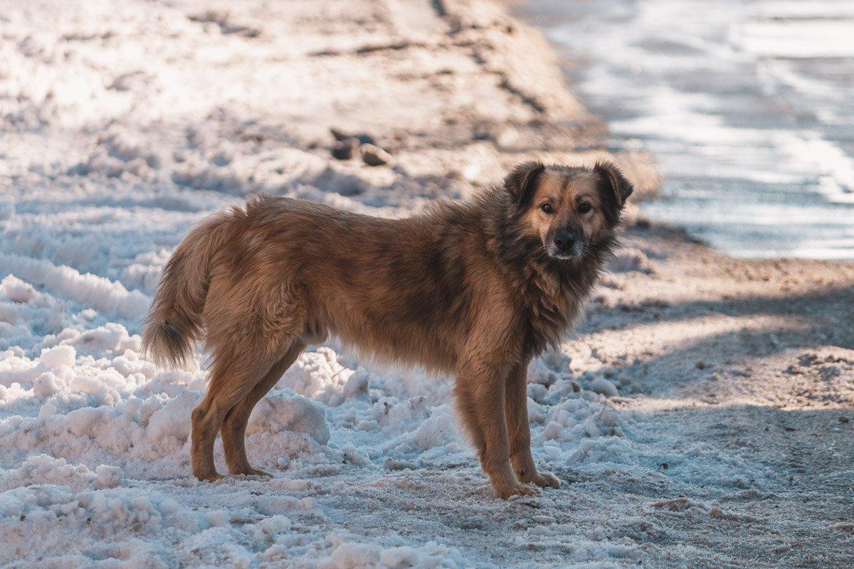 Красивый бродячий пес