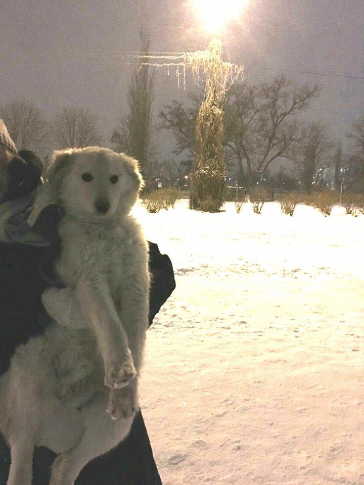 Большая бела собака найдена в районе Кристалла