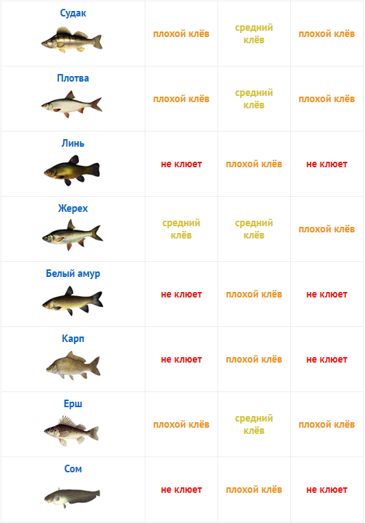 Будет ли клевать завтра рыба в кемерово