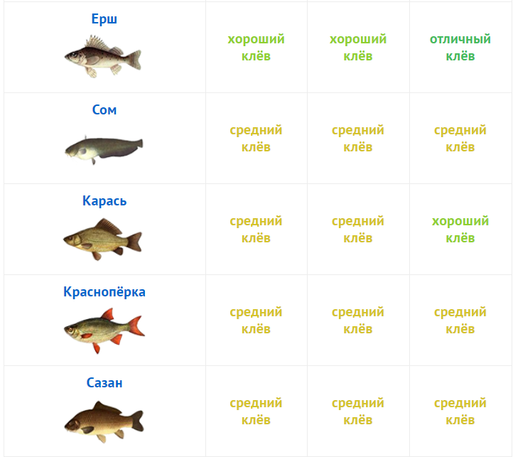 Прогноз клева в Рязанской области, г Спасск-Рязанский на завтра, на неделю, на 10 дней