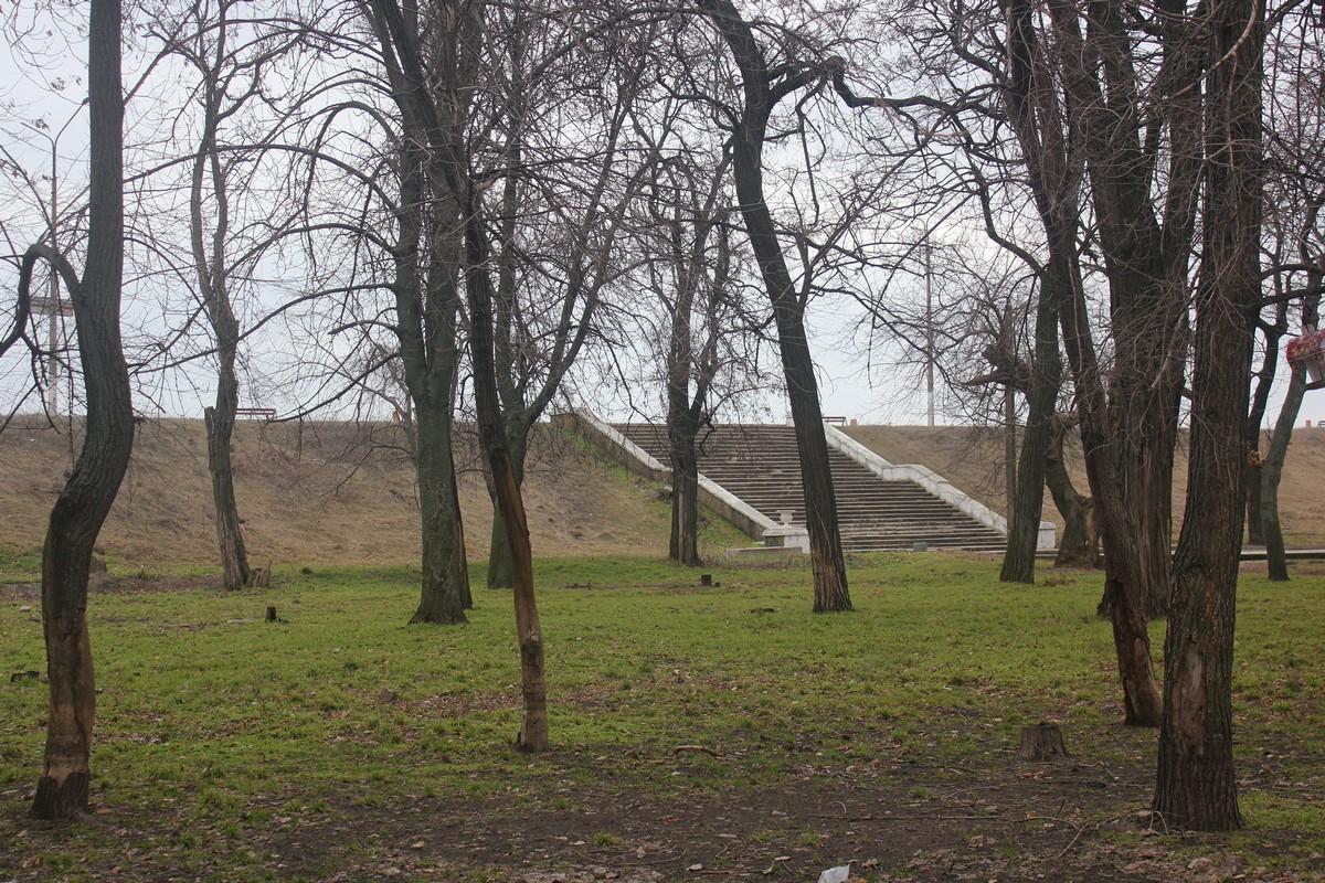 В парке появляется зеленая трава