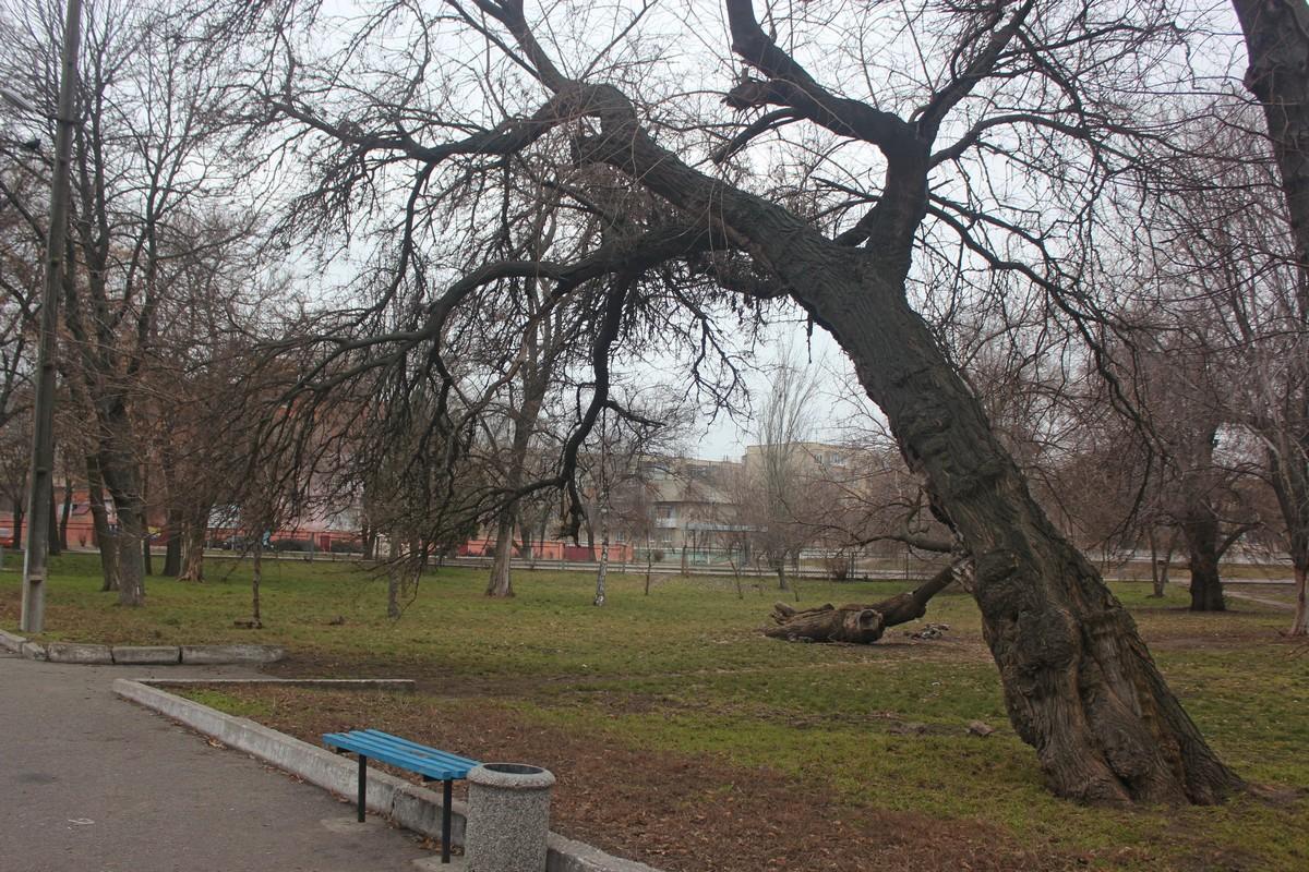 Эти деревья помнят многое
