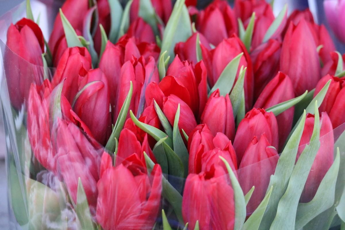 Пара тюльпан роскошная