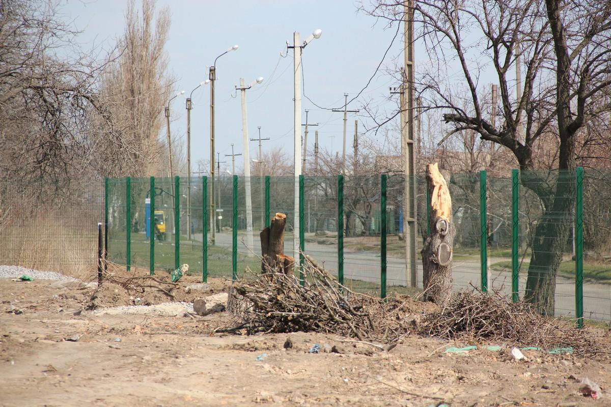 На территории проводят подготовительные работы, корчуют старые аварийные деревья