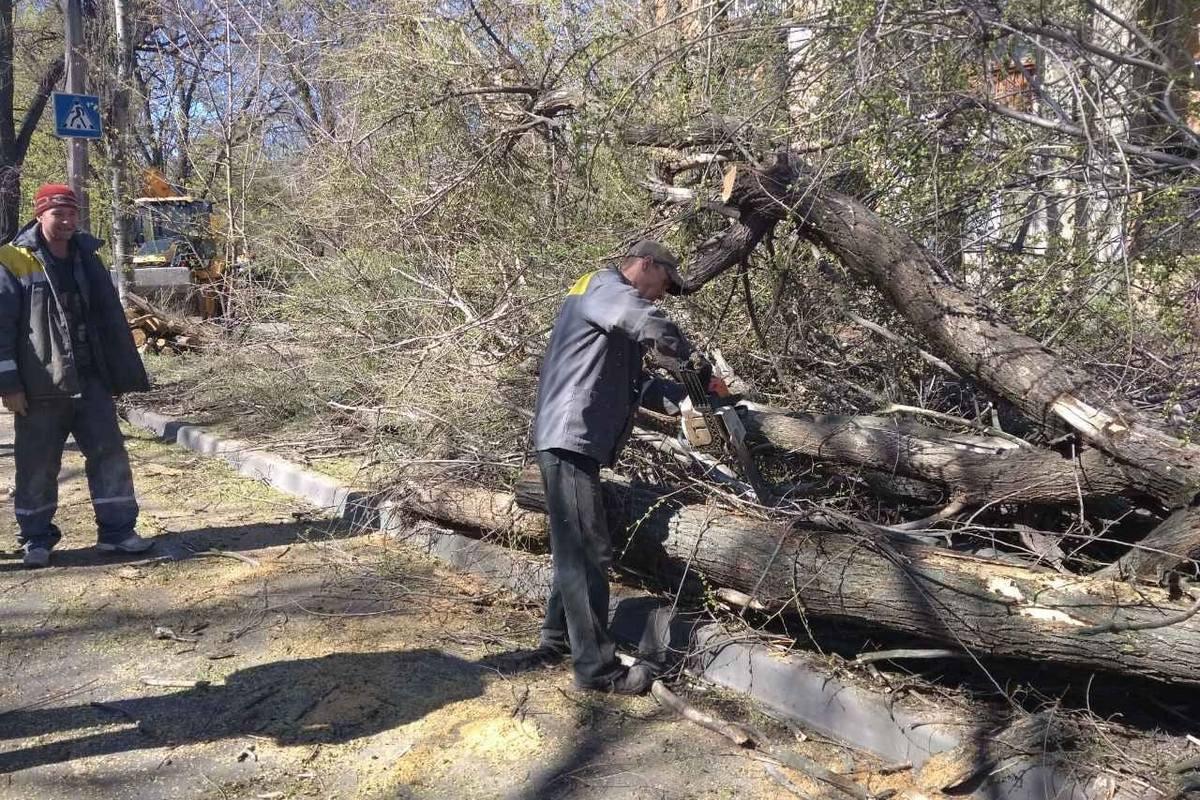 Проезжую часть быстро освободили от упавшего дерева