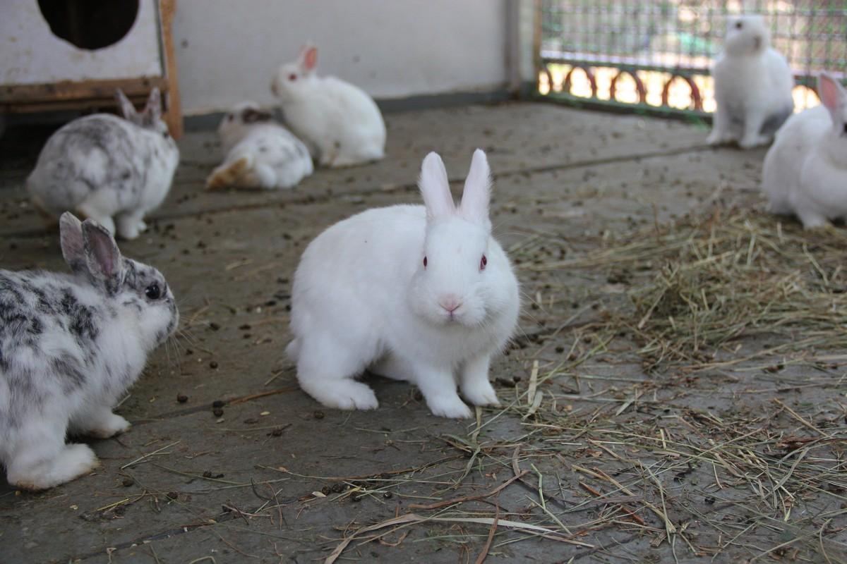 Вольер с животными появился в начале сезона
