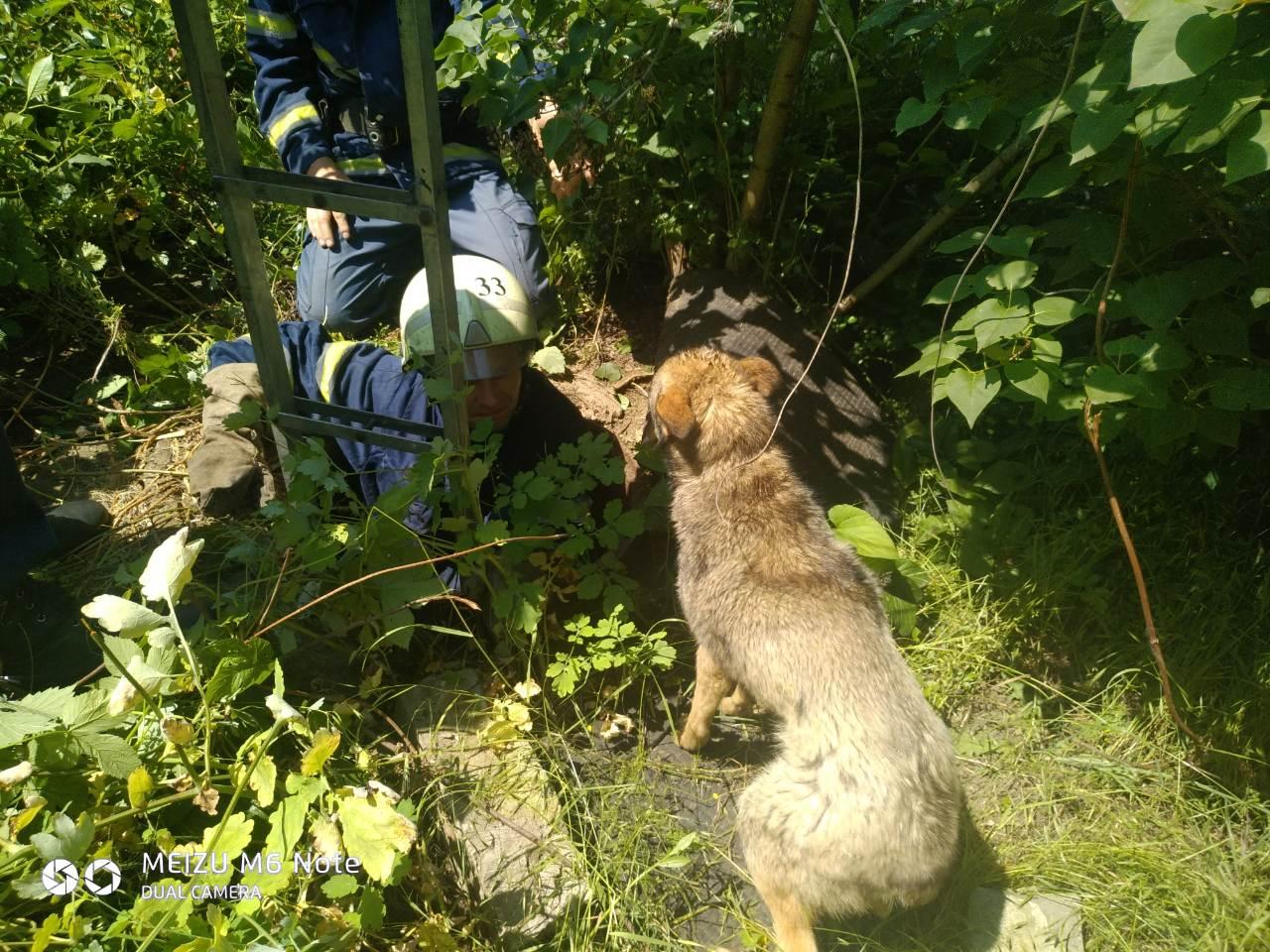 В Марганце спасли собаку, которая упала 2-метровый люк