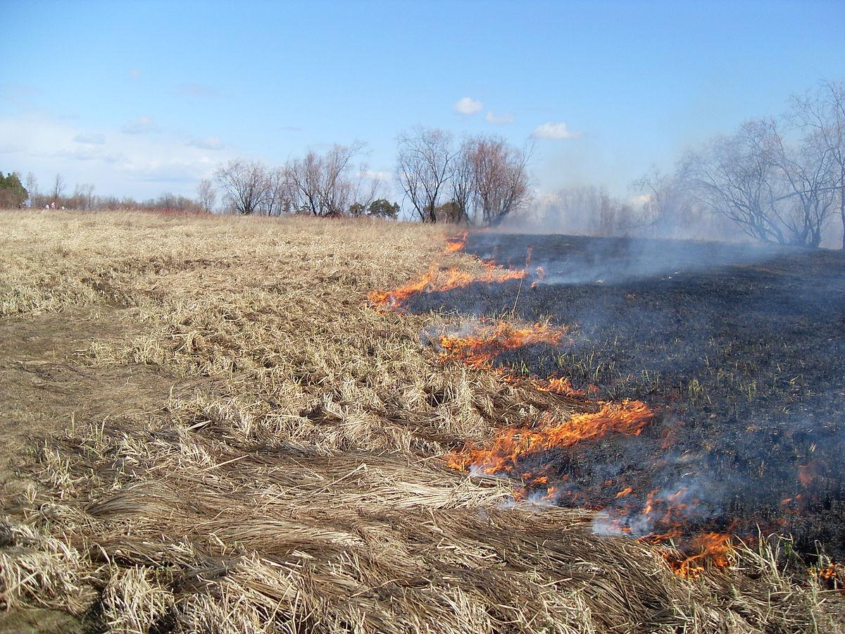 В Днепропетровской области за сутки случилось 6 пожаров в экосистемах