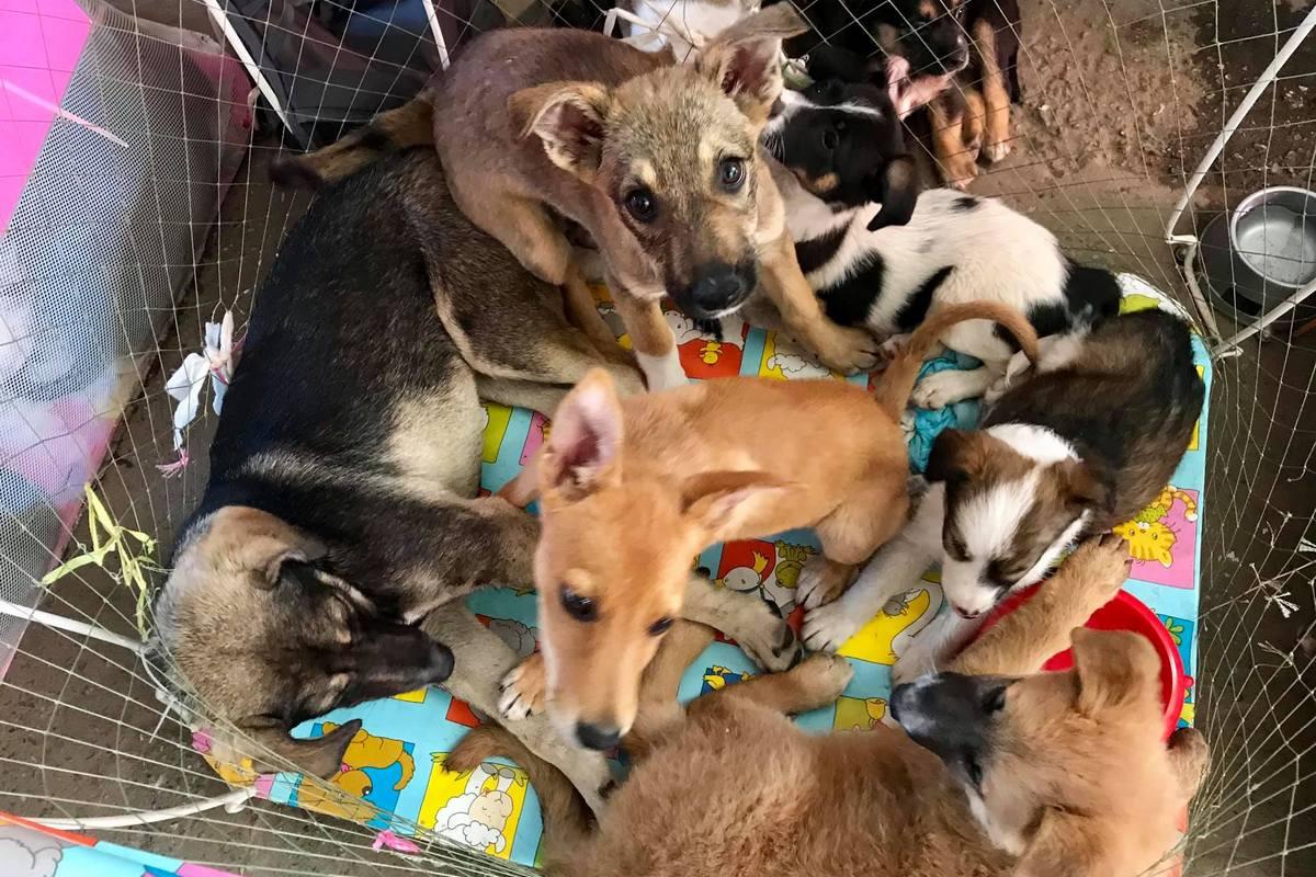 Присоединяйтесь к доброму делу, помогите найти животным дом